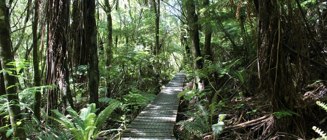 Wairarapa Nature Immersion Walks