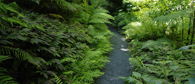Spotlight on Ferns - Guided Tour