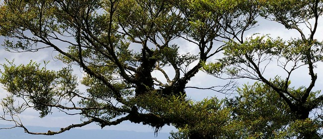 Spotlight on Trees – Guided Tour