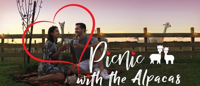 Picnic with the Alpacas - Sold Out