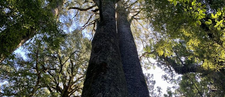Fensham reserve tree and bird walk