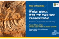 Wisdom In Teeth - What Teeth Reveal About Mammal Evolution