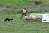 Kumeroa Sheep Dog Trials