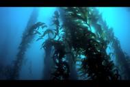 Seaweek Event - Movie Screening 'Wonders of the Sea'