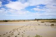 Seaweek Event - Whanganui Beach Clean Up