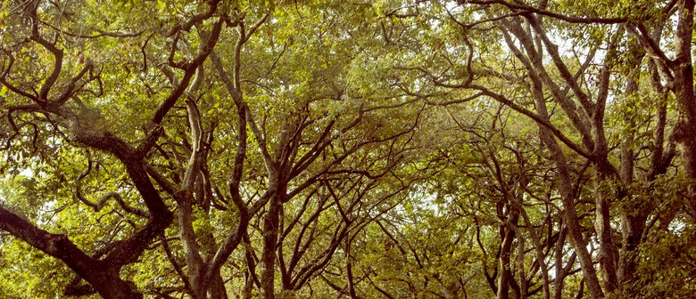 Guided Walk: Forest Therapy