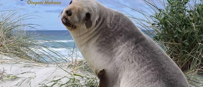 Pakake, NZ Sea Lion Adventure