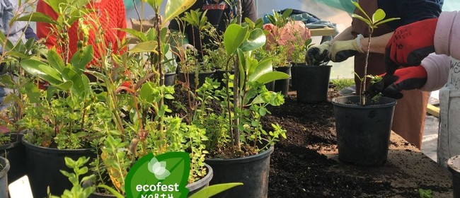 Friends of Wainoni Park Volunteer Mornings - EcoFest North