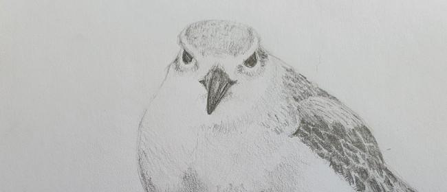 Creating Images of Iconic New Zealand Birds
