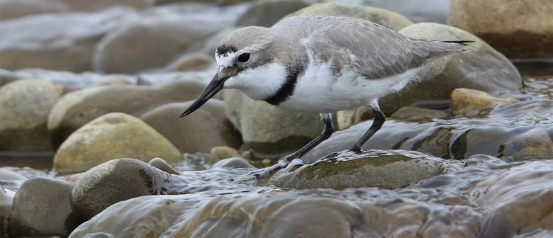 Forest & Bird - River of hope - Ashley-Rakahuri river care