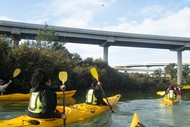 Motu Manawa Kayak Day