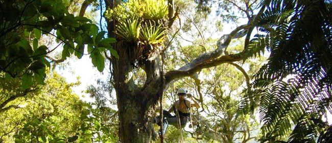 The Hidden World of Epiphytes: Life in the Forest Canopy