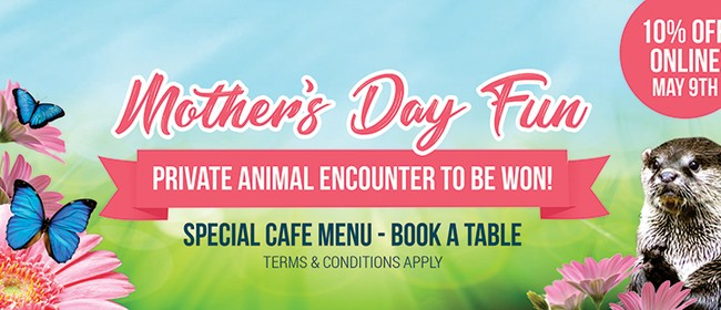 Mother's Day Fun at Butterfly Creek