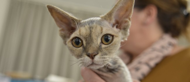 Canterbury Allbreeds Cat Show