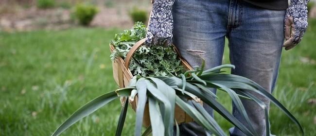 Organic Gardening Design