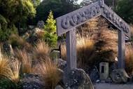 Wellington's Ferns