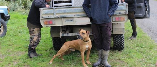 Kiwi Avoidance Training for Dogs