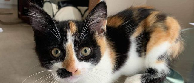 Kitten Adoption Party