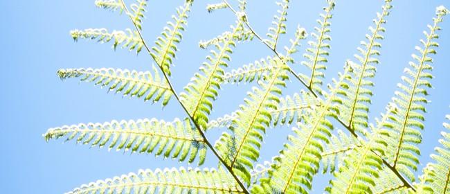Mahi on the Maunga - Planting Day