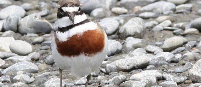 Forest & Bird Talk: Marlborough's East Coast