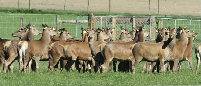Deer Expo
