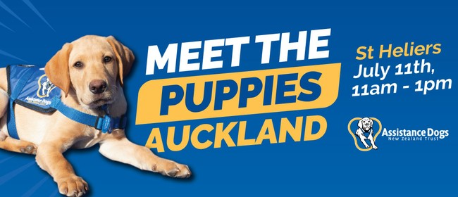 Meet the Puppies - Assistance Dogs New Zealand Trust