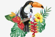 Wine and Paint Party - Tropical Bird Toucan Painting