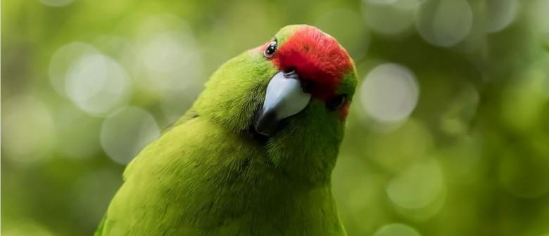 Kids Go Free At Zealandia This July