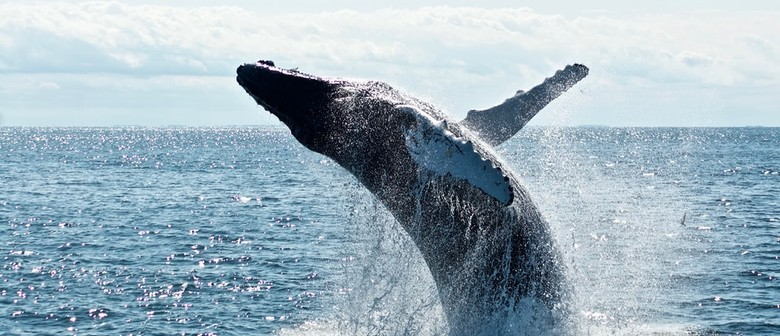 School Holiday Programme - Ocean Creatures