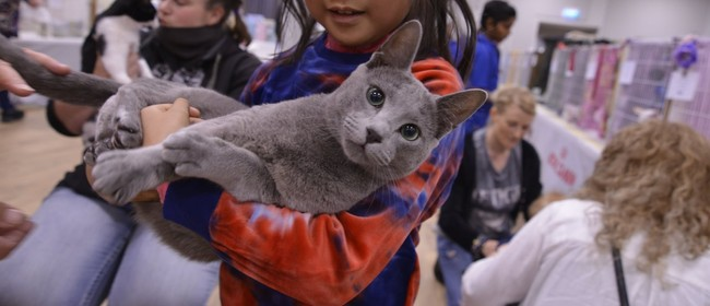 South Island National Cat Show hosted by CABCC