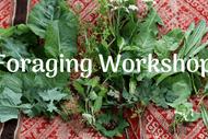 Foraging for Edible Weeds Workshop