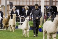 Image for event: 2021 National Alpaca Show: CANCELLED