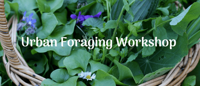Winter Urban Foraging Workshop - Learn To Forage For Edibles