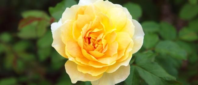Rose & Winter Pruning
