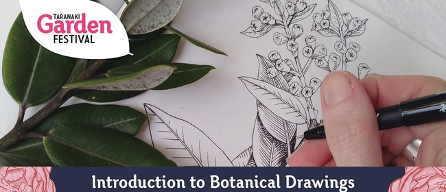 Introduction to Botanical Drawing: SOLD OUT