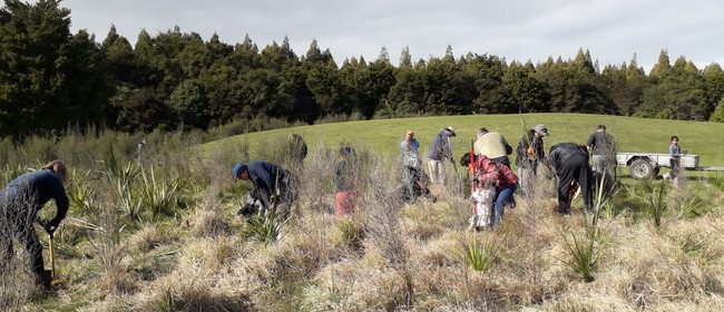 Hamilton Tree Planting Group