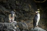 West Coast Penguin Wilderness – Expressive Photo Retreat
