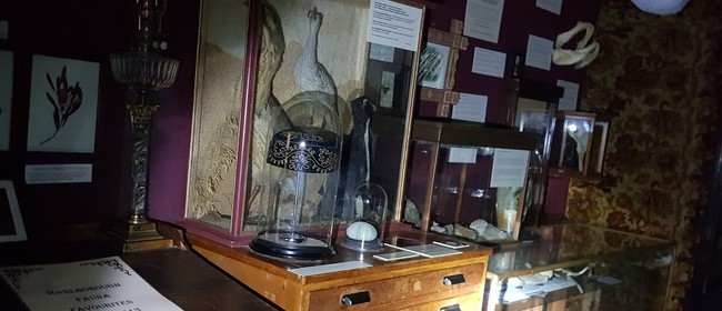 Dead Things in the Museum - Tour By Torchlight