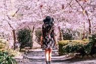 Blossom Valley