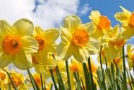 Spring Show – Caroline Bay Hall