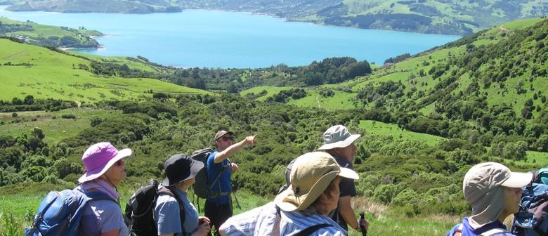 16 Carews Peak Adventure - From Swamp to Summit