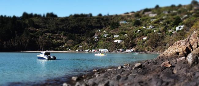 20 Kaioruru/Church Bay Rock-Hopper