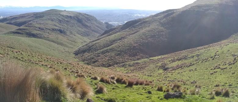 06 Exploring Avoca Valley