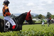 Christmas at the Races - Humphries Construction Manawatu Cup