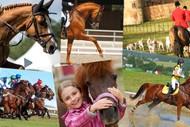Marlborough Equine Expo