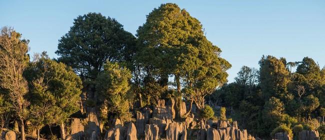 Waitomo Wanders