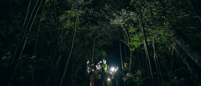 Kiwi Month Night Walk