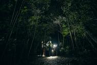 Image for event: Kiwi Month Night Walk