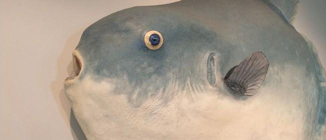 Sunfish Surprise!