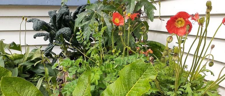 Biodiversity In The Backyard